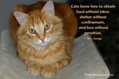 www.images and cats quotes.com | Sayings, Quotes: W.L. George