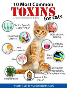 10 most common toxins for cats. at health, cat health problems, cat health care,… - Pet Health Cat Care Tips, Pet Care, Care Care, Cat Health Care, Health Tips, Cat Info, Kitten Care, Cat Behavior, Cat Facts