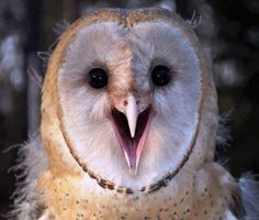 Excited owl is excited.