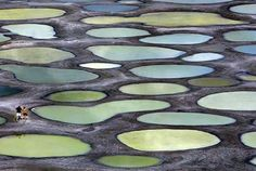 Canada's Spotted Lake in Osoyoos, BC, a sacred medicine lake of the Okanagan people.
