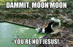 Moon moon!!!