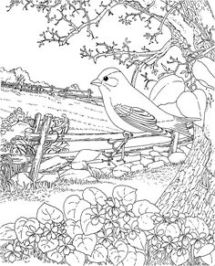 Free Printable Coloring Page...New Jersey State Bird and Flower, Goldfinch, Purple Violet, educational printables