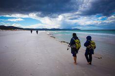 Friendly Beaches, Freycinet, Tasmania Aussie Memes, Great Walks, My Dream Came True, Beautiful Places, To Go, Wildlife, Island, Adventure, Beach