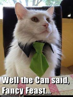 More Cat Memes | Modern Cat magazine