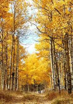 Taken In Cripple Creek, CO By Debsho One of the many hiking paths in Cripple Creek