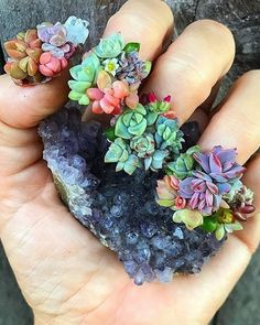 Super succulent #succulove nails! Perfection! By @arozona