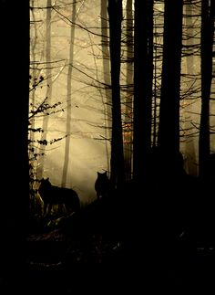 Obscured: allows the viewer to observe the wolves that are on the two-thirds perpendicular lines to truly exemplify the dark forest