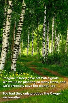 Imagine if trees gave off Wifi signals. We would be planting so many trees, and we'd probably save the Planet, too. Too bad they only produce the Oxygen we breathe.