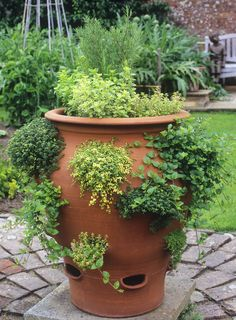 How to grow a herb garden Herb garden: a beginner's guide to planting, growing and harvesting Container Herb Garden, Herb Planters, Herb Pots, Veg Garden, Planter Ideas, Garden Path, Easy Small Garden Ideas, Easy Garden, Culture D'herbes