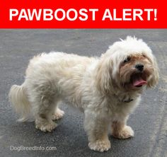 Is this your lost pet? Found in Miami Beach, FL 33141. Please spread the word so we can find the owner!  Look like a maltese walking around  Nearest Address: Near 79th St & Abbott Ave