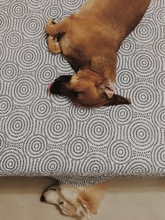 Tirando uma soneca em pura sintonia. 🥺♥️ #vsco | antoniacanavitsas | VSCO Vsco Feed, Animal Print Rug, Rugs, Animals, Take A Nap, Farmhouse Rugs, Animales, Animaux, Animal