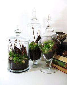 """These stunning glass terrariums feature found treasures of the north woods. Fresh live fern moss, river stones, knotty wood, and large pine cones all placed aesthetically in a multi-layer process. As the pine cones dry they will open naturally. The tall apothecary jar measures 16"""" high by 3.5"""" wide, the medium is 14"""" high by 5"""" wide, and the shortest measures 11"""" high by 6"""" wide."""