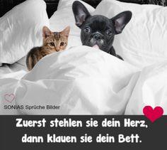 lustiges Bild 'Lustige Schlafplätze.jpg'- Eine von 22722 Dateien in der Kategorie 'witzige Bilder' auf FUNPOT.