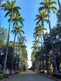 Praça da Liberdade/Belo horizonte MG