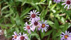 Late Season Wildflowers, Nymph and Dream Lakes hike, Rocky Mountain National Park, Sept. 15, 2011 (pinned by haw-creek.com)