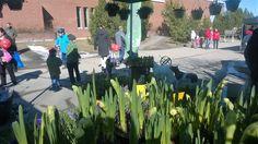 Mäntsälän Messut tänään lauantaina   Kivapiha Plants, Planters, Plant, Planting