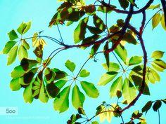 Green & Light. - Pinned by Mak Khalaf Nature LeavesLightNatureSky by hishammostafa07