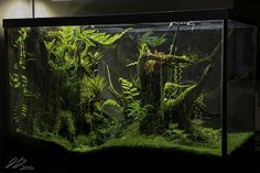 Stunning vivarium setup and all the details on how Justin Grimm designed it.