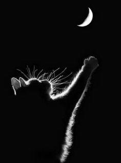 Fotografien von Katzensilhoueten: So wundervoll sind sie - watson