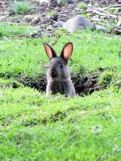 Sorry to have dug a hole in your yard, wait...I'm a rabbit! I'm not sorry! lol!