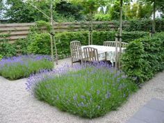 Lavendel en de beukenhaag een mooi combinatie samen met het grint!