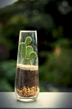 48 Cool Small Cactus Ideas For Home Decoration. The market in cactus house plants is booming and with very good reason. These prickly little guys are great fun, easy to keep and very attractive. Cactus Terrarium, Cactus House Plants, Cactus Planters, Terrarium Ideas, Glass Terrarium, Mini Cactus Garden, Small Cactus Plants, Planter Ideas, Cactus Diys