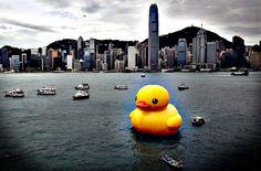 Florentijn Hofman's duck in Hong Kong.  Photo: Bobby Yip/Reuters.