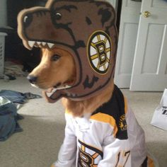 We love this little Bruin's fan. True dedication! #Hockey #Humor