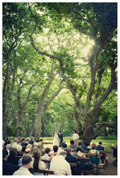 Venue: Beloftebos Cape Town Wedding Venues, Wedding Reception, Wedding Planning, Wedding Ideas, My Land, Marry Me, South Africa, Dolores Park, Wedding Decorations