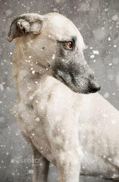 500px / In the depth of winter by Elke Vogelsang