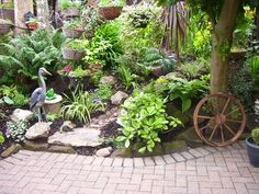 Organic Gardening Supplies Near Me Refferal: 1285833706 Patio Garden, Garden Design, Drought Resistant Plants, Plants, Garden Maintenance, Small Gardens, Outdoor Gardens, Rockery Garden, Easy Garden