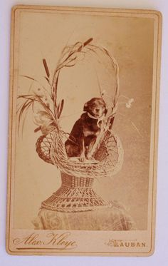 Antique CDV Photograph ~ Sweet Dog In Basket