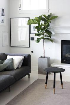 T&N: Groen tegen wit. Mooie plant