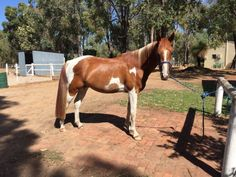 View Listing - Equestrian Classifieds for WA, NSW, VIC, SA, NT, TAS and QLD