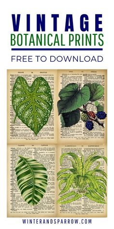 Screen in decoration: 60 ideas to help you choose - Home Fashion Trend Vintage Botanical Prints, Vintage Prints, Vintage Posters, Botanical Decor, Free Printable Art, Free Printables, Printable Paper, Free Art Prints, Free Graphics