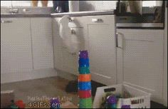 New trending GIF on Giphy. bird destruction chaos destroy no fucks given. Follow Me CooliPhone6Case on Twitter Facebook Google Instagram LinkedIn Blogger Tumblr Youtube