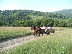 Horse cart riding is fun for children and adults :)) Riding Mountain, Mountain Biking, Horse Cart, Culture Travel, Folklore, Romania, Horses, Traditional, Mountains