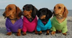 Wieners all lined up