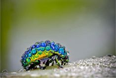 http://petapixel.com/2012/09/21/stunning-macro-photographs-of-insects-glowing-in-the-morning-dew/