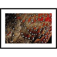 Global Gallery 'Ring-Necked Pheasant Detail of Back Feathers from a Male, Europe' Framed Photographic Print Size: