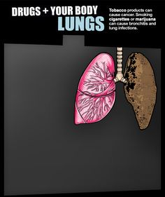 DRUGS + YOUR BODY :: Lungs