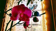 Orchidea.  #travel #instatravel #trip #italy #viaggi #viaggiare #viaggio #voyager #vacanza #italia #italia #love #estate #traveling #rome #europe #photo #wanderlust #lazio #travelling #instagram #ontheroad #voyage #Roma #travelgram #ricordi #sky #natura #viamargutta #landscape
