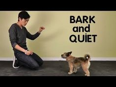 Train your dog to stop barking with scientific methods and compassion, not intimidation, force, or pain. You and your dog will appreciate the end result! #puppytraining #Dog