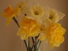 Bring spring indoors, too. By Paulette Avery of Moraga