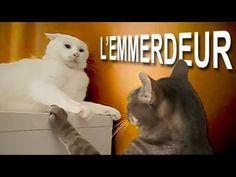 L'EMMERDEUR - PAROLE DE CHAT - YouTube