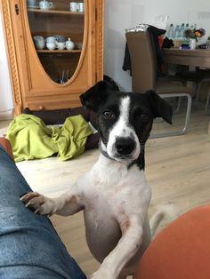 Hunde Foto: Frank und Skyler - Guten Morgen Hier Dein Bild hochladen: http://ichliebehunde.com/hund-des-tages  #hund #hunde #hundebild #hundebilder #dog #dogs #dogfun  #dogpic #dogpictures