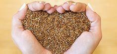 I semi di lino