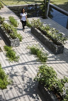 Image 2 of 26 from gallery of Vegetable Trellis  / Cong Sinh Architects. Photograph by Hiroyuki Oki