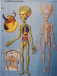 anatomia alienigena