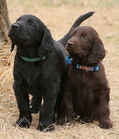 Someday Puppy 6 Will Grow Into His Collar….. .